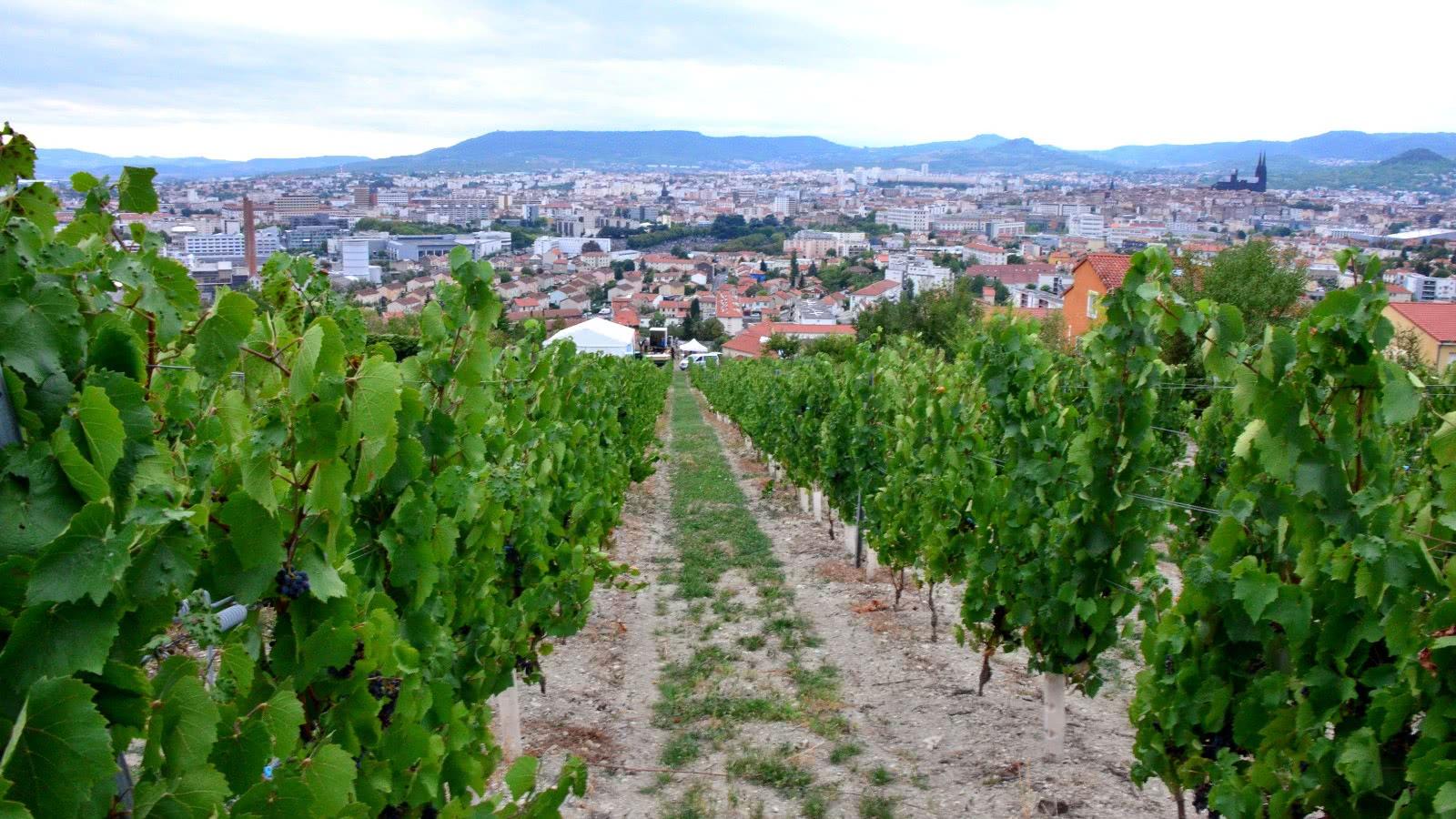 Vignes Clermont