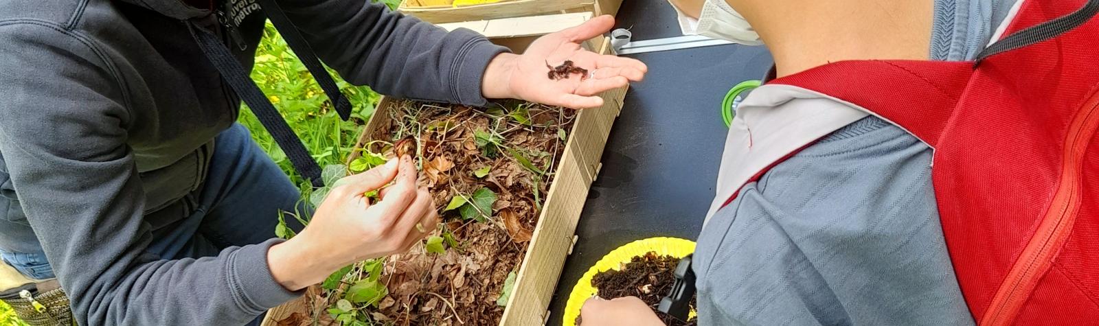 © En tête-à-tête avec les vers de terre ou l'art du compostage