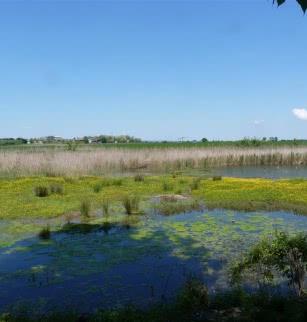 Marais de Lambre