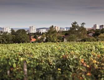 Fédération viticole du puy-de-dôme