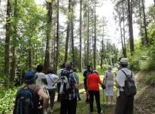 Les vendredis Nature : L'arboretum de Royat