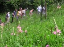 Les vendredis Nature : Le parc thermal de Royat