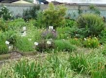 Les vendredis Nature : le jardin botanique de la Charme
