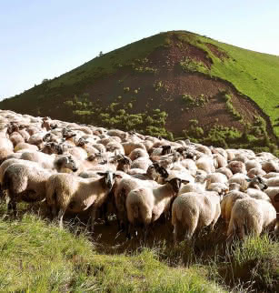 Explore la nature en Chaîne des Puys (ateliers - balades jeune public) : les prairies au pied du puy de Dôme