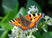Biodiversité sur le Puy d'Aubière
