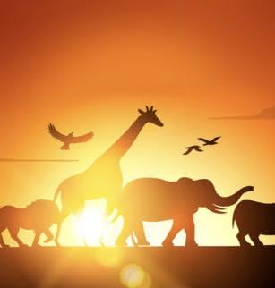 Safari symphonique