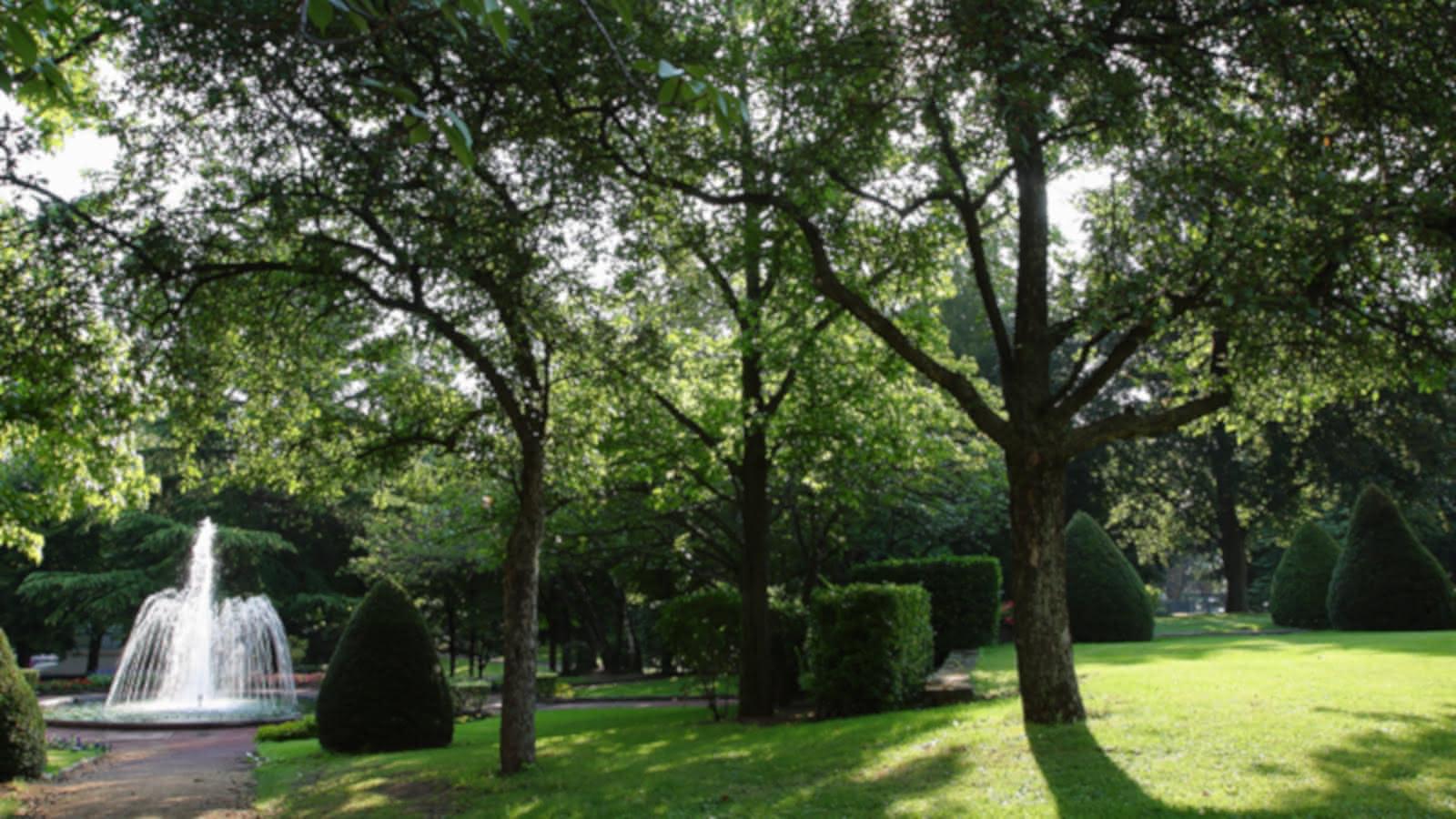 Muséum Henri-Lecoq - Graine de science : Un arbre dans la ville