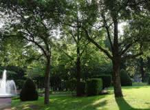 Muséum Henri-Lecoq : Un arbre dans la ville