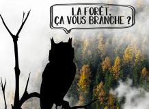 Soirée apéro-quiz : La Forêt, ça vous branche ?