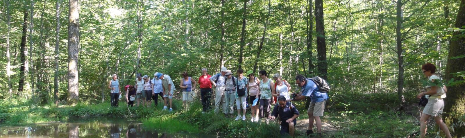 Promenade du jeudi : Si la Forêt m'était Comté