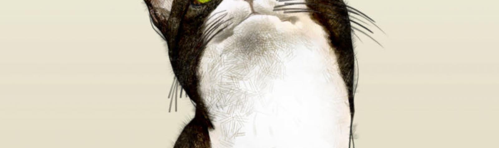 La 2Deuche : Chatouille