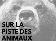Littérature et Animal : Jeu de piste