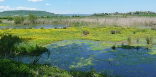 Marais de Lambre à Gerzat